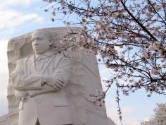 MLK Blossoms