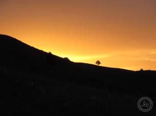 SD sunrise w tree