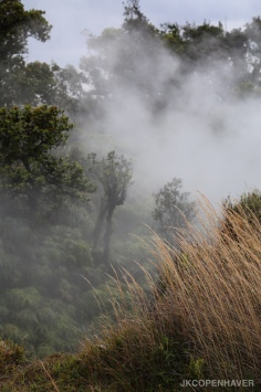 Steam fro the Mauna Loa volcano